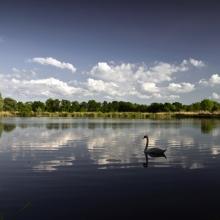 Rybníček s labutí podruhé