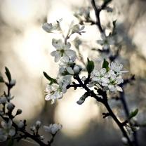Vešlo jaro mezi domy